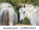 horse portrait with dry burs... | Shutterstock . vector #1198914535