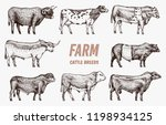 farm cattle bulls and cows.... | Shutterstock .eps vector #1198934125