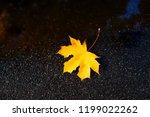 Fallen Single Autumn Yellow...