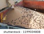 levator crane loads ship holds ...   Shutterstock . vector #1199034808