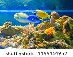 beautiful fish in the aquarium. ... | Shutterstock . vector #1199154952