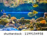 beautiful fish in the aquarium. ... | Shutterstock . vector #1199154958