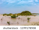 red sea coast and mangroves in... | Shutterstock . vector #1199178508