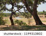 panorama and wildlife on the... | Shutterstock . vector #1199313802