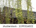 green fern leaves on a... | Shutterstock . vector #1199316022