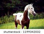 beautiful paint horse stallion... | Shutterstock . vector #1199342032