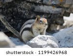 Ground Squirrel On A Rock On A...