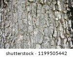 tree bark texture  old bark... | Shutterstock . vector #1199505442