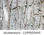 tree bark texture  old bark... | Shutterstock . vector #1199505445