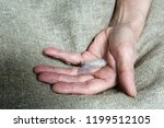 a light feather on the hand of... | Shutterstock . vector #1199512105
