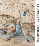arrowhead lying in the sand | Shutterstock . vector #1199521468