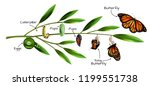 butterfly metamorphosis on... | Shutterstock .eps vector #1199551738