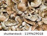 field champignons. edible...   Shutterstock . vector #1199629018