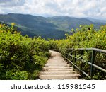 walkway in tung bua tong ... | Shutterstock . vector #119981545
