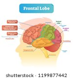 frontal lobe vector... | Shutterstock .eps vector #1199877442