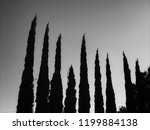 a row of italian cypress trees. | Shutterstock . vector #1199884138