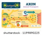 axon vector illustration.... | Shutterstock .eps vector #1199890225