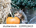 Cute Little Squirrel...