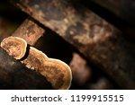 orange mushrooms found on...   Shutterstock . vector #1199915515