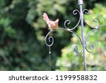 female northern cardinal... | Shutterstock . vector #1199958832
