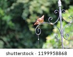 female northern cardinal... | Shutterstock . vector #1199958868