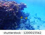 coral reef in egypt with color... | Shutterstock . vector #1200015562
