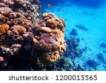 coral reef in egypt with color... | Shutterstock . vector #1200015565