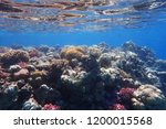 coral reef in egypt with color... | Shutterstock . vector #1200015568