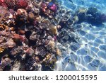 coral reef in egypt with color... | Shutterstock . vector #1200015595