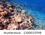 coral reef in egypt with color... | Shutterstock . vector #1200015598
