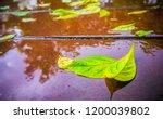 bright green leaves on a wet... | Shutterstock . vector #1200039802