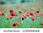 gorgeous poppy flower photos.... | Shutterstock . vector #1200068068