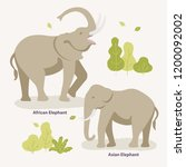 african elephant and asian...   Shutterstock .eps vector #1200092002