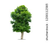 green tree for use in buildings ...   Shutterstock . vector #1200112585