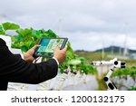farmer business holding a... | Shutterstock . vector #1200132175