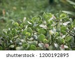 close up of succulent plant... | Shutterstock . vector #1200192895