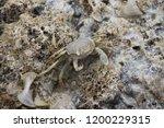 crab in its natural habitat ... | Shutterstock . vector #1200229315