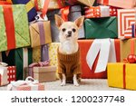 close up view of adorable... | Shutterstock . vector #1200237748