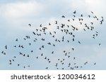 Many Birds Flying In The Sky ...