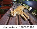Sleeping Cat  Cat Sleep On Chair