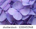 pink hydrangea background....   Shutterstock . vector #1200452968