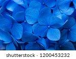 blue hydrangea background....   Shutterstock . vector #1200453232