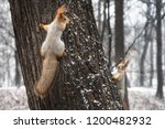 Two Squirrels Playing On A Tree