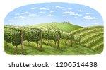 colorfull vine plantation hills ... | Shutterstock .eps vector #1200514438