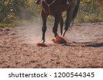 brown horse feet making dust in ...   Shutterstock . vector #1200544345