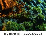 green moss and lichen cover...   Shutterstock . vector #1200572395