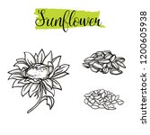 beautiful vector hand drawn... | Shutterstock .eps vector #1200605938