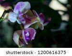 flowers of pink yellow motley... | Shutterstock . vector #1200616375