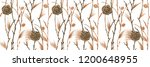 botanical watercolor. cones and ...   Shutterstock . vector #1200648955