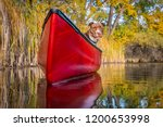 pit bull terrier in a red canoe ... | Shutterstock . vector #1200653998